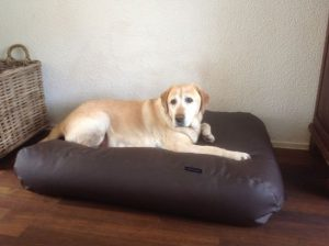 dogs-companion-hondenbed-xl-140-x-95-cm-chocolade-bruin-leather-look