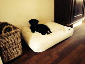 dogs-companion-hondenbed-xl-140-x-95-cm-ivory-leather-look